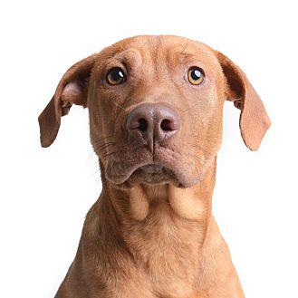 Hound (Unknown Type) Mix Dog for adoption in Wilmington, Delaware - Goku