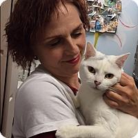 Adopt A Pet :: Amari - Manchester, CT