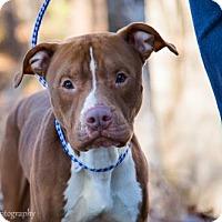 Adopt A Pet :: Wagner - Clarkesville, GA