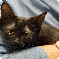 Adopt A Pet :: Little Bear - Alameda, CA