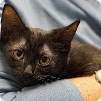 Adopt A Pet :: Little Bear - Alameda, CA
