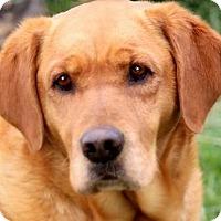 Adopt A Pet :: MORRIS(WE DON'T WANT HIM! READ - Wakefield, RI
