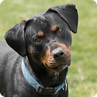 Adopt A Pet :: Vetta - Westfield, NY
