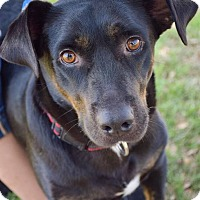 Adopt A Pet :: Evelyn - DFW, TX