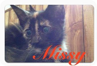 Domestic Shorthair Kitten for adoption in Fairborn, Ohio - Missy