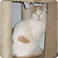 Adopt A Pet :: Mr. Eddie - Etobicoke, ON