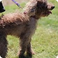 Adopt A Pet :: Snickers - Justin, TX