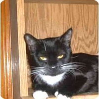Adopt A Pet :: Angel - Bedford, MA