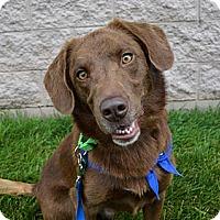 Adopt A Pet :: Buster Brown - Tipp City, OH