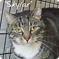 Adopt A Pet :: Skylar - Ocean City, NJ