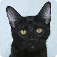 Adopt A Pet :: Fernando V - Sacramento, CA