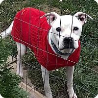 Adopt A Pet :: Rosie - Zanesville, OH