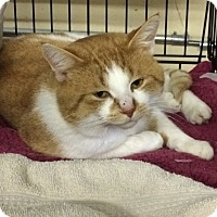 Adopt A Pet :: Jack - Byron Center, MI