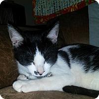Adopt A Pet :: Smudge - Huntsville, AL