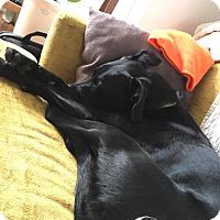 Adopt A Pet :: Bailey - Blue Bell, PA