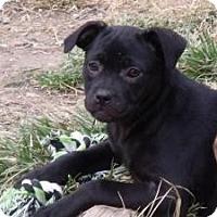 Adopt A Pet :: Jetta - Hancock, MI
