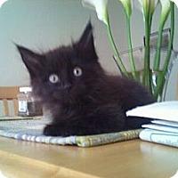 Adopt A Pet :: Howard - Modesto, CA