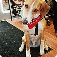 Adopt A Pet :: Hunter - Douglas, ON