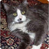 Adopt A Pet :: BenFrank - Portland, OR