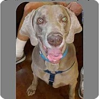 Adopt A Pet :: CHURCHILL - Las Vegas, NV