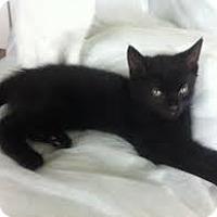 Adopt A Pet :: Stephanie - Lancaster, MA