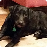 Adopt A Pet :: Chloe - Lewisville, IN