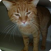 Adopt A Pet :: Eli - Hamburg, NY