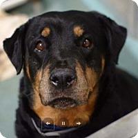 Adopt A Pet :: Maxi - Hillsboro, NH