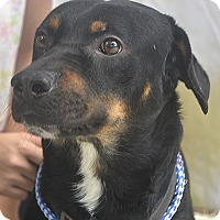 Adopt A Pet :: Daddy Rot - St. Thomas, VI