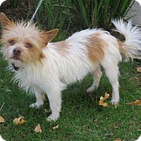Terrier (Unknown Type, Small) Mix Dog for adoption in Tracy, California - Charlie