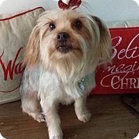 Adopt A Pet :: Molly - Encino, CA