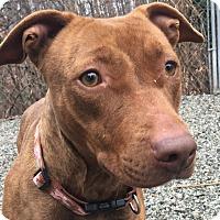 Adopt A Pet :: Gina - Greensboro, NC