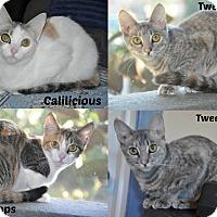Adopt A Pet :: 4 kittens need homes! (Ormond) - New Smyrna Beach, FL