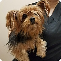 Adopt A Pet :: Lilly - Minerva, OH