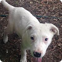 Adopt A Pet :: Anders - Trenton, NJ