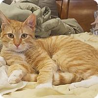Adopt A Pet :: Quinn - Millersville, MD