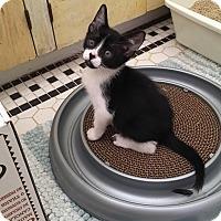 Adopt A Pet :: Mark - Mission Viejo, CA