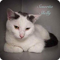 Adopt A Pet :: Senorita Shelly - Newport, KY