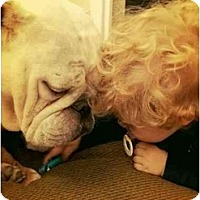 Adopt A Pet :: Buddy - Winder, GA