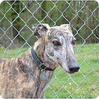 Adopt A Pet :: Fern (Royal Fernette) - Chagrin Falls, OH