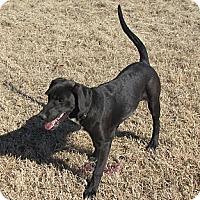 Adopt A Pet :: Count - Natchitoches, LA