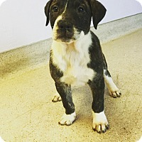Adopt A Pet :: 3 - Scottsdale, AZ