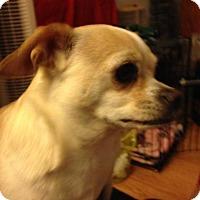 Adopt A Pet :: Olaf - Seattle, WA