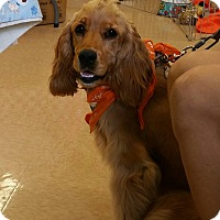 Adopt A Pet :: GiGI - Odessa, FL
