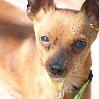 Adopt A Pet :: Copper - Richmond, KY