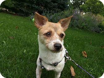 Irish Terrier/Terrier (Unknown Type, Small) Mix Dog for adoption in Lisle, Illinois - Princess