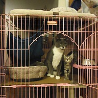 Adopt A Pet :: Katie - Dale City, VA