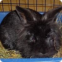 Adopt A Pet :: Dempsey - Woburn, MA