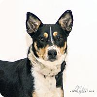 Adopt A Pet :: Lisbeth - Naperville, IL
