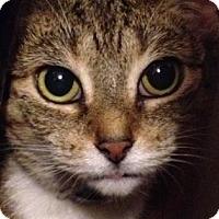 Adopt A Pet :: Jojo - New York, NY